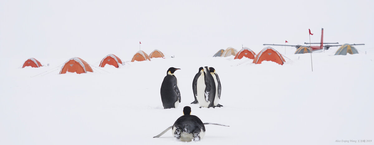 A group of emperor penguins stand beside ALE's Gould Bay Camp