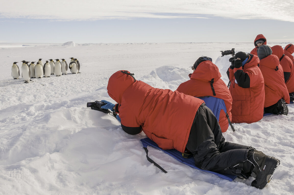 Guests photograph a group of adult emperor penguins