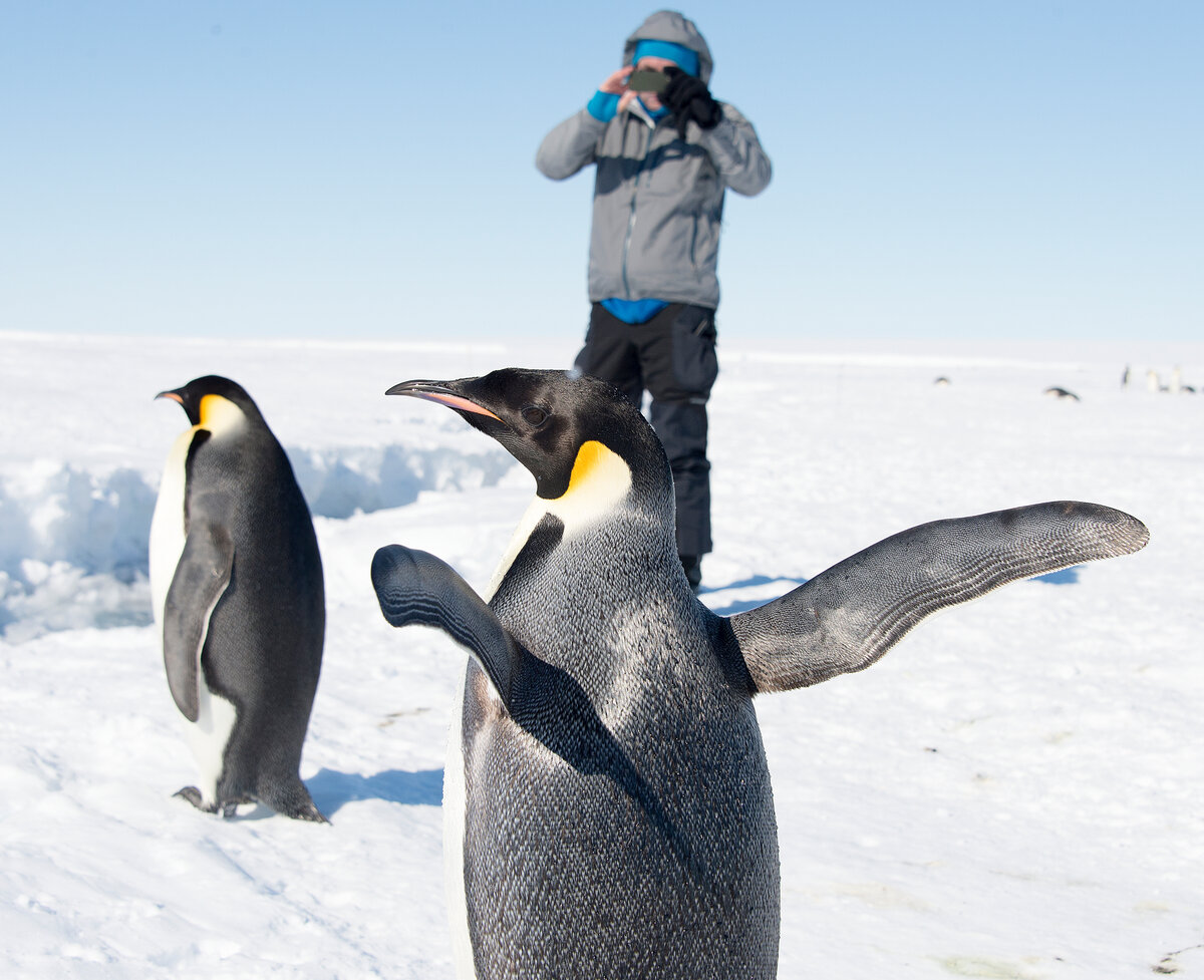 Photographing emperor penguins near a lead in the sea ice